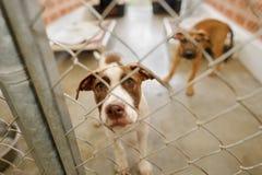 Refugio del perro Imagen de archivo libre de regalías