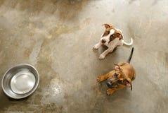 Refugio del perro Fotografía de archivo libre de regalías