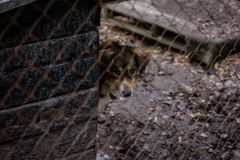 Refugio del perro del perro Imagenes de archivo