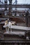 Refugio del perro del perro Fotografía de archivo