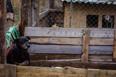 Refugio del perro del perro Imagen de archivo
