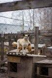 Refugio del perro del perro Foto de archivo libre de regalías