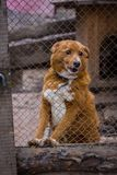 Refugio del perro del perro Imágenes de archivo libres de regalías