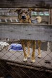 Refugio del perro del perro Foto de archivo