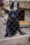 Refugio del perro del perro Fotografía de archivo libre de regalías
