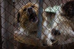 Refugio del perro del perro Fotos de archivo