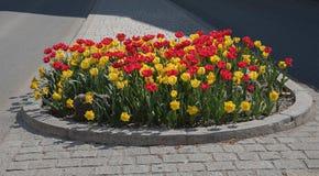 Refugio del tráfico con la plantación colorida del tulipán Fotografía de archivo libre de regalías