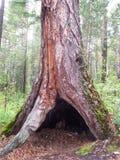 Refugio en un árbol Fotos de archivo libres de regalías