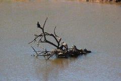 Refugio flotante Imagen de archivo libre de regalías