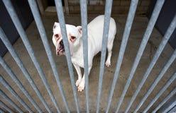 Refugio para animales Fotos de archivo