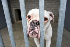 Refugio para animales Foto de archivo