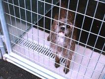 Refugio para animales foto de archivo libre de regalías