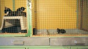 Refugio para animales, animales en jaulas en el refugio para animales almacen de video