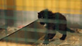 Refugio para animales, gatito negro en una jaula almacen de metraje de vídeo
