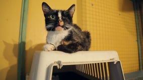 Refugio para animales, gato inválido sin un ojo metrajes