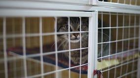 Refugio para animales, gatos que esperan a sus nuevos propietarios metrajes