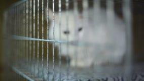 Refugio para animales, gatos que esperan a sus nuevos propietarios almacen de video