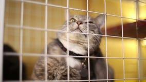 Refugio para animales, gatos que esperan a sus nuevos propietarios almacen de metraje de vídeo