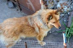 Refugio para animales Hogar del embarque para los perros Foto de archivo