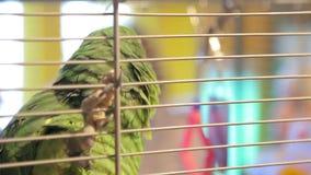 Refugio para animales, loro en una jaula almacen de metraje de vídeo