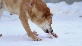 Refugio para animales, perro que mastica un hueso metrajes