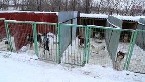 Refugio para animales, perros que esperan a sus nuevos propietarios almacen de video