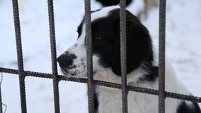 Refugio para animales, perros que esperan a sus nuevos propietarios almacen de metraje de vídeo