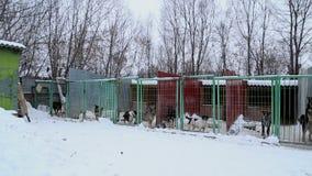 Refugio para animales, perros que esperan a sus nuevos propietarios metrajes