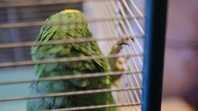 Refugio para animales, vidas del loro en una jaula almacen de metraje de vídeo