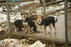 Refugio para los perros sin hogar Foto de archivo
