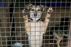 Refugio para los perros sin hogar Fotografía de archivo libre de regalías