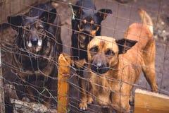 Refugio para los perros sin hogar Foto de archivo libre de regalías