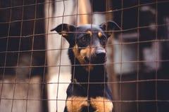 Refugio para los perros sin hogar Imagenes de archivo