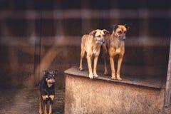 Refugio para los perros sin hogar Imágenes de archivo libres de regalías