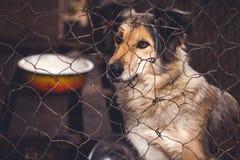 Refugio para los perros sin hogar Fotos de archivo libres de regalías
