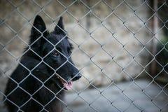 Refugio para los perros sin hogar Imagen de archivo libre de regalías