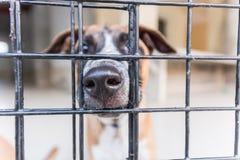 Refugio para los perros sin hogar, esperando a un nuevo propietario Fotografía de archivo libre de regalías