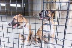 Refugio para los perros sin hogar, esperando a un nuevo propietario Imagen de archivo