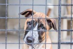 Refugio para los perros sin hogar, esperando a un nuevo propietario Imagen de archivo libre de regalías