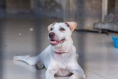 Refugio para los perros sin hogar, esperando a un nuevo propietario Fotografía de archivo
