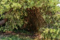 Refugio secreto en el bosque Imagenes de archivo
