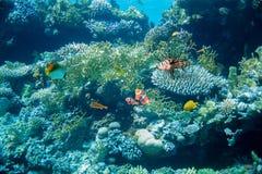 Refuje z i różnorodność koralami ciężkimi, miękkimi i Zdjęcia Stock