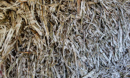 Refuse from processing of sugarcane Royalty Free Stock Photography