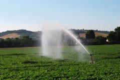 Regadera de la irrigación Imagenes de archivo