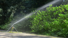 Regadera que riega las plantas en parque almacen de video
