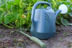 Regadera y pequeño rastrillo de jardín de la mano con el arbusto del vege joven Fotografía de archivo