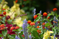 Regaderas de la flor Fotos de archivo