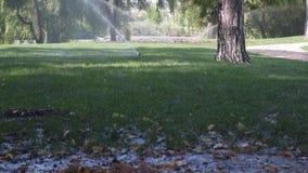 Regaderas giratorias del agua instaladas en parque público con el césped y los árboles de la hierba verde almacen de metraje de vídeo