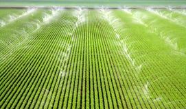 Regaderas que irrigan un campo de granja Fotos de archivo