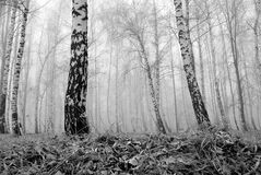 Regain dans la forêt Image libre de droits